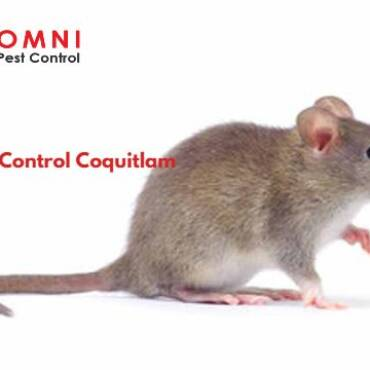 How to Control Rodents in Coquitlam